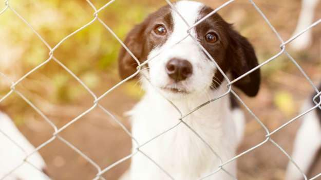 Animal Rights Organisation Against Proposal to Export Dog Meat