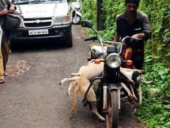 This Is What Kerala Officials Say About Mass Dog Killings