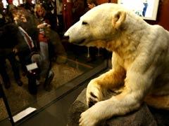 Scientists Solve Mystery of Polar Bear Knut's Death