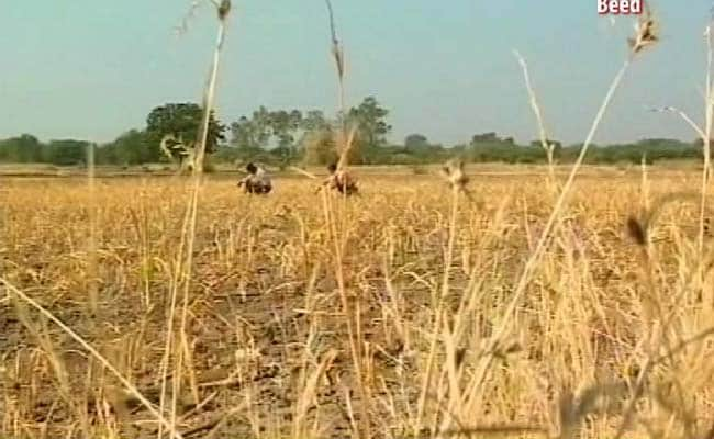 Centre Announces Rs 300 Crore Agriculture Package for Bihar