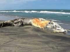 33-Feet-Long Whale Carcass Washed Ashore in Tamil Nadu