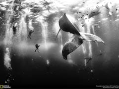 The Winners of NatGeo's Photo Contest Will Take Your Breath Away