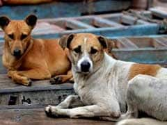 90-Year-Old Attacked Allegedly By Stray Dogs In Kerala