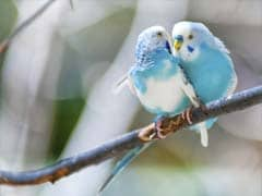 Not Only Humans, Birds Fall in Love Too