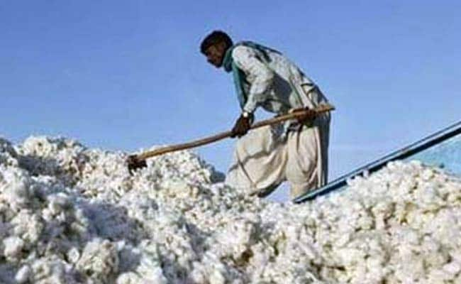 Cotton Exports Gain Pace As Overseas Price Rise, Rupee Weakens