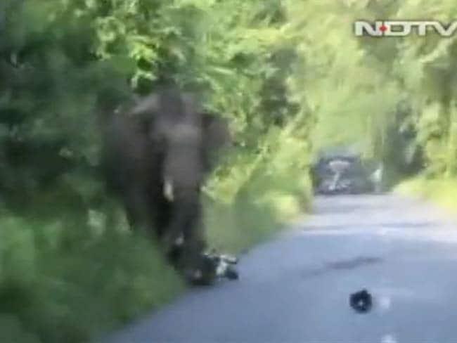 पश्चिम बंगाल: जलपाईगुड़ी में एक हाथी के हमले में बाल-बाल बचे दो बाइक सवार