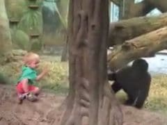 Baby Gorilla's Adorable Game of Peek-a-Boo with Baby Human