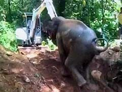 A Village Came Out To Save This Baby. It's An Elephant