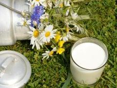Organic Milk, Meat Richer in Omega-3: Study