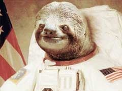 Astronaut Sloth Conquered the Internet; Now He's Going to the Moon