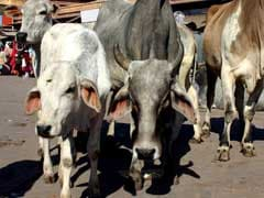 Uttar Pradesh Officials Miss January 10 Deadline To Relocate Stray Cattle