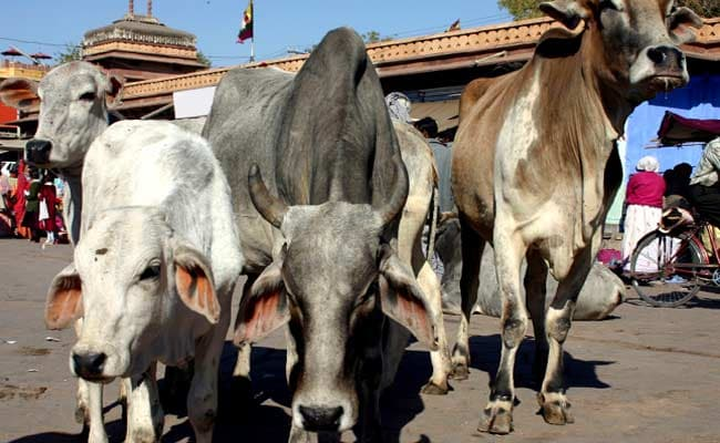 Abandoning Cow Could Soon Be A Criminal Offence In Madhya Pradesh