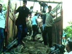 दिल्ली में बीजेपी के नेतृत्व में खुलेआम धमकियां देते, हल्ला करते घूम रहे हैं 'अराजक गोरक्षक'