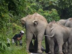 Moped Rider Begs for Mercy as Angry Elephants Charge at him in Thailand