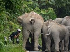 वायरल : हाथ जोड़े, तब जाकर हाथियों ने बख्शी बाइक सवार की जान