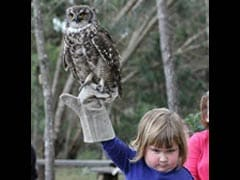 Pic of Grumpy Girl With Owl Leads to Epic Photoshop Battle