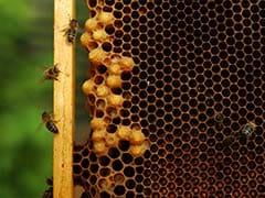 Even Honeybees Love Coffee