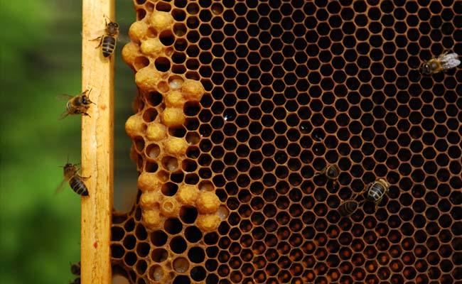 सड़क हादसे में हजारों मधुमक्खियों की मौत, जानें क्या है पूरा मामला