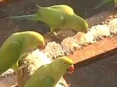 For The Love of Birds: This Chennai Man Feeds 2,000 Parrots Every Day