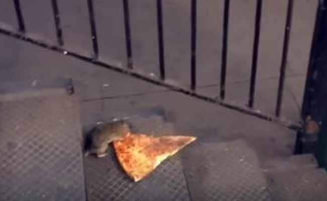 Why your Pizza Rat GIFs are Disappearing off Social Media