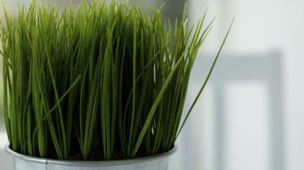 how to take wheatgrass tablets