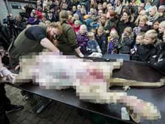 Outrage as Danish Zoo Dissects Lion in Front of Children