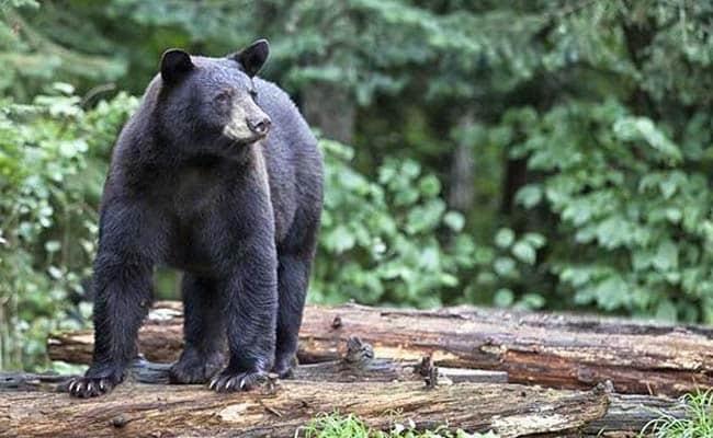 छत्तीसगढ़ में भालू को बचाने की कोशिश में पूर्व छात्रसंघ अध्यक्ष की दर्दनाक मौत