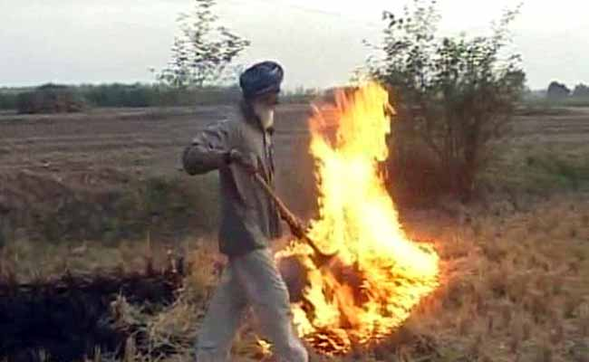 धान की पराली जलाने के सिवाए किसानों के पास कोई विकल्प नहीं