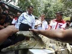 Escape Claws: Tigers, Piranhas May Join Indonesia Crocodile Prison Guard