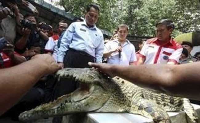 Escape Claws: Tigers, Piranhas May Join Indonesia Crocodile Prison Guard
