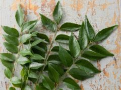 Curry Leaves For Hair Growth: Here Are Some Simple Methods To Use These Amazing Leaves To Control Hair Fall