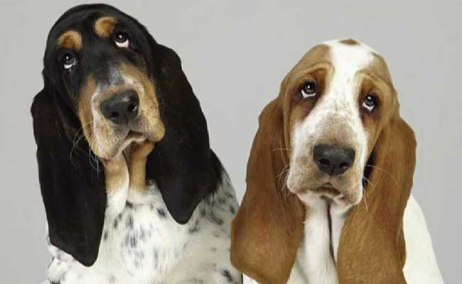 New Drug May Calm Anxious Dogs During Noisy Events