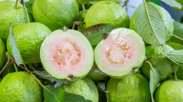 guava benefits 625