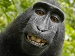 The Monkey 'Selfie' Copyright Battle is Still Going On, and It's Getting Weirder