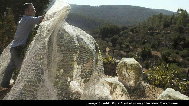 Israel Breaks New Ground in the Wine Industry