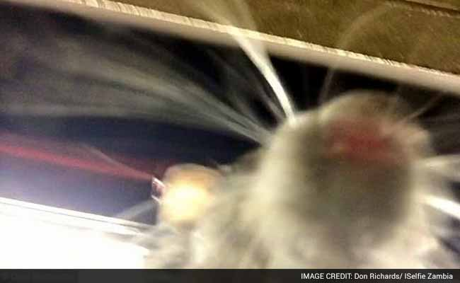 Now, a New York Rat Takes a Selfie