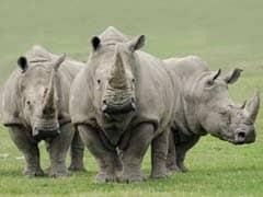 Rhino Dies In Burachapori Wildlife Sanctuary