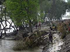 Sundarbans Has 182 Tigers, Pollution A Major Concern: Report