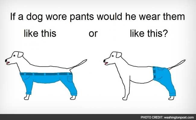 dog wearing pants wp_650x400_61451447657 how should a dog wear pants' is the meme we deserve for the end of 2015