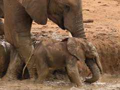 Elephants Pull Off Incredible Rescue of Calf Stuck in a Ditch