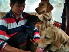 Dogs From Flood-Hit Chennai Find Safe Home in Bengaluru