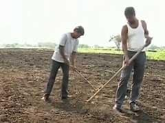 Farmers File Police Complaint Against IMD For 'Wrong' Forecast