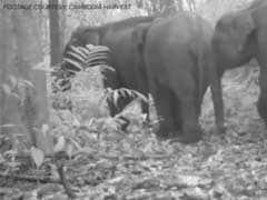 Rare Cambodian Elephant Footage Raises Survival Hopes