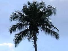 गोवा : वेंडेल रोड्रिक्स ने नारियल के पेड़ विवाद के संबंध में राज्यपाल से मुलाकात की