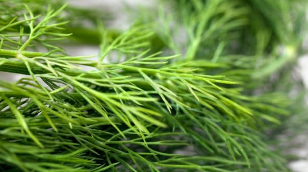 Parsley and Dill May Help Fight Cancer, Scientists Reveal