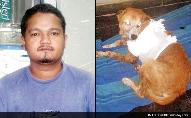 Man Arrested For Stabbing Dog After Animal Bit His Daughter