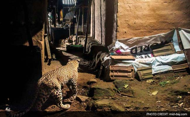 Hey MMRDA, Aarey Is A Forest And It Has Leopards. Here's Proof