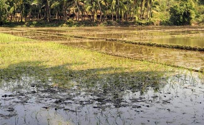 Unseasonal Rain, Hail Batter Standing Crops in Maharashtra, Madhya Pradesh