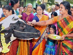 Pongal 2018: How People In Tamil Nadu Celebrate The Harvest Festival