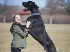 This 7-Feet-Tall Great Dane May Just be the World's Tallest Dog